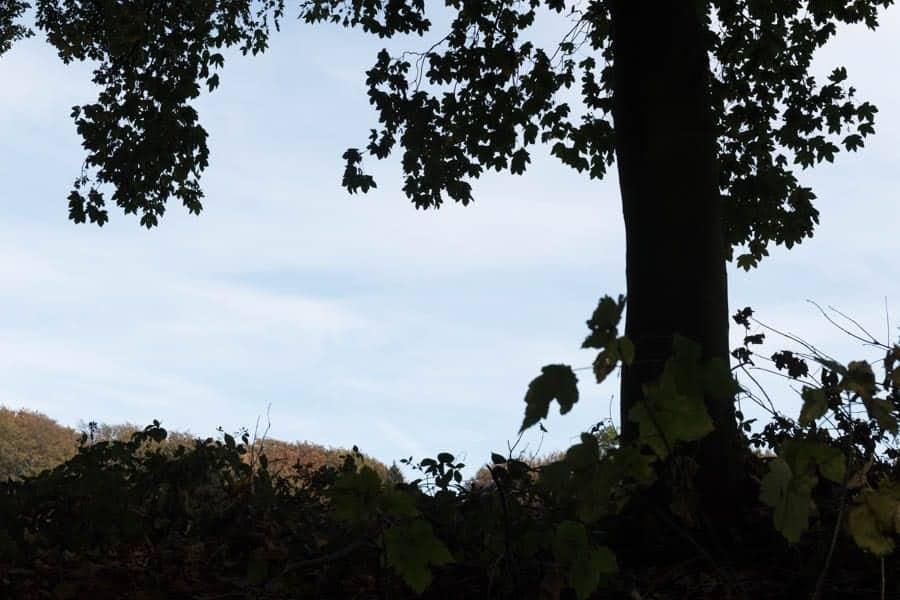 Demo-Foto mit mit 1,7 Blendenstufen Überbelichtung (ETTR)